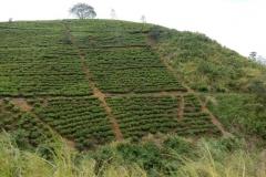 nuwara-eliya-hill-country-sri-lanka-blog-z-otroki-dopust-z-otroki-azija12