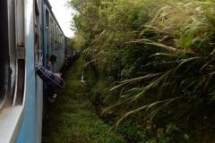 nuwara-eliya-hill-country-sri-lanka-blog-z-otroki-dopust-z-otroki-azija13